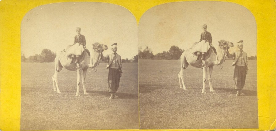 Central Park The camel 1868