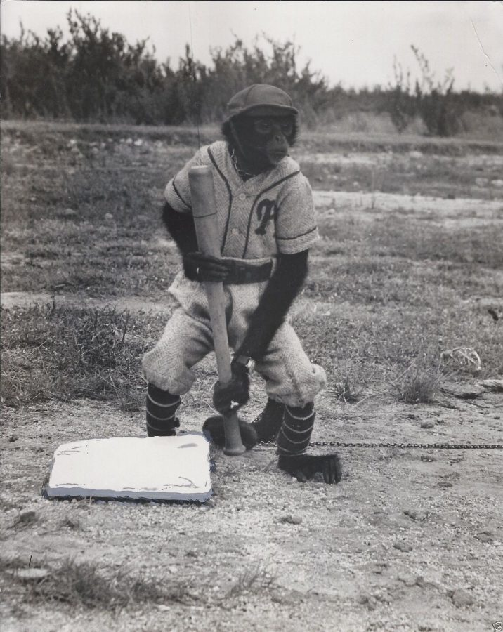 The Havana Baseball Monkey 1950s