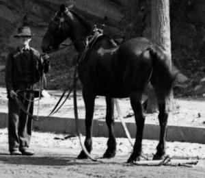 Horse 123rd St Boulevard New York City c 1895