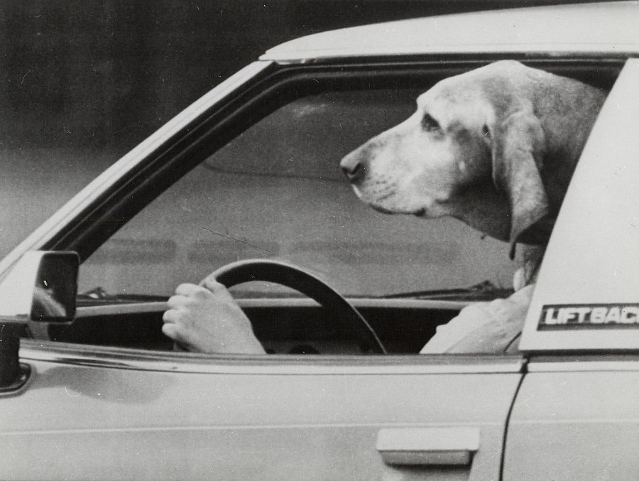 Dog Drives Car photo AP
