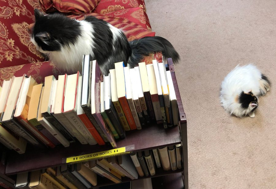 Thyme and Cutiepie Cats at the Book Barn Niantic