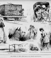 New York City Used To Kill Its Stray Dogs By Drowning Them